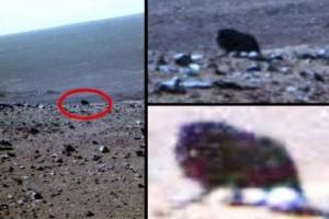 Жизнь на Марсе: уфологи сделали снимок живого существа