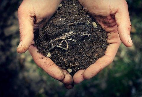В Украине могут провести референдум по рынку земли