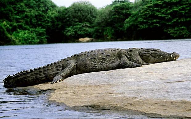 60 сбежавших крокодилов наводят страх на жителей юга Вьетнама