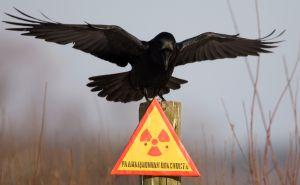 В Greenpeace потребовали расследовать факт утечки радиации на Урале